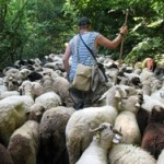 Transhumance in Kotel Mountain