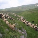 Transhumance on summer pastures in Central Balkans