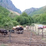 Typical livestock husbandry in Kotel Mountain