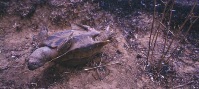 (Български) Природозащитниците са борят с бедствието в Кресненския пролом. Пожарът заплашва биоразнообразието и дългогодишния им труд…