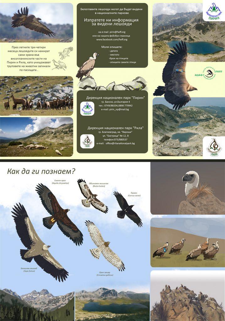 The vultures in Pirin and Rila - identification and report of observations Лешоядите в Пирин и Рила, определяне и споделяне на наблюдения.
