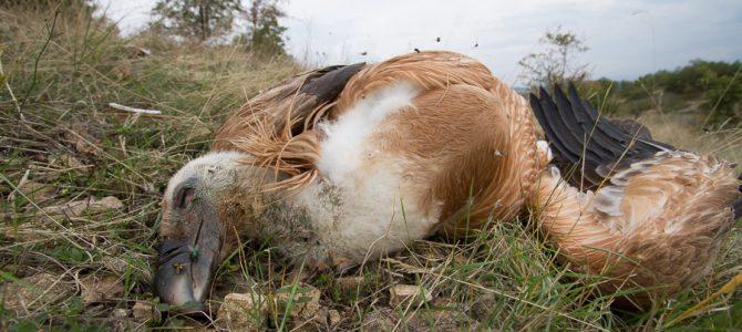Шестнадесет лешояди станаха жертвите на опасните електропроводи в района Сливен-Котел