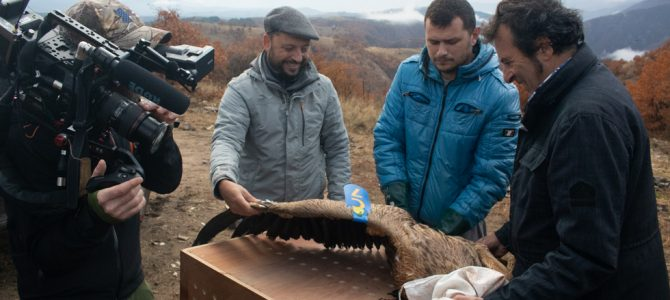 Télévision Française 1 (TF1) is filming the donation of vultures from France to Bulgaria